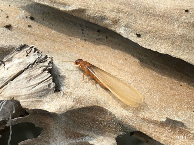 羽 大量 蟻 黒 発生 アリ