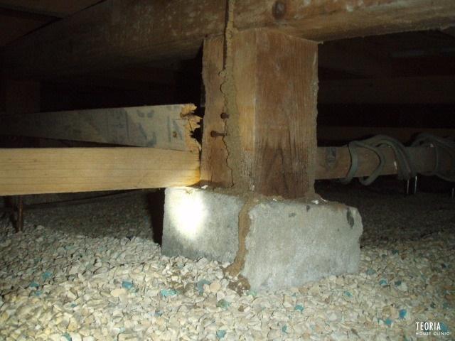 調湿材を通過するシロアリ