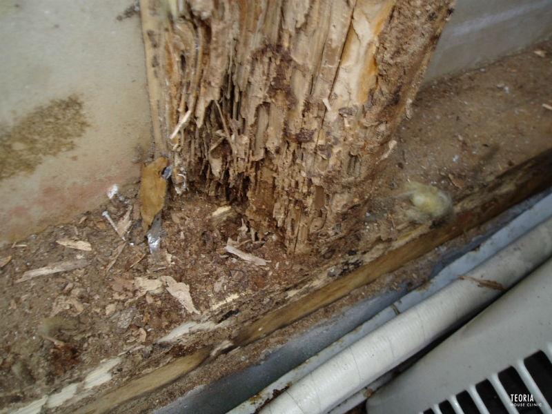 ヤマトシロアリの巣