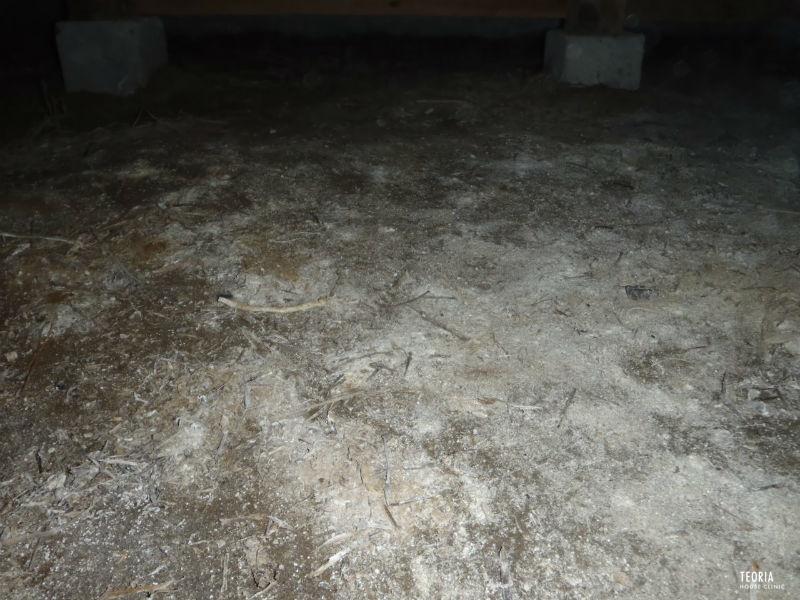 湿気た土壌