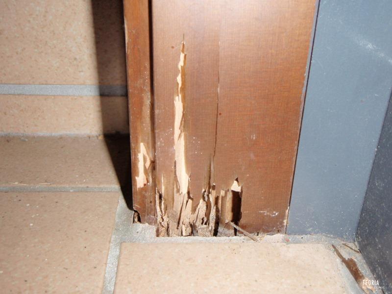 玄関ドア枠のシロアリ被害