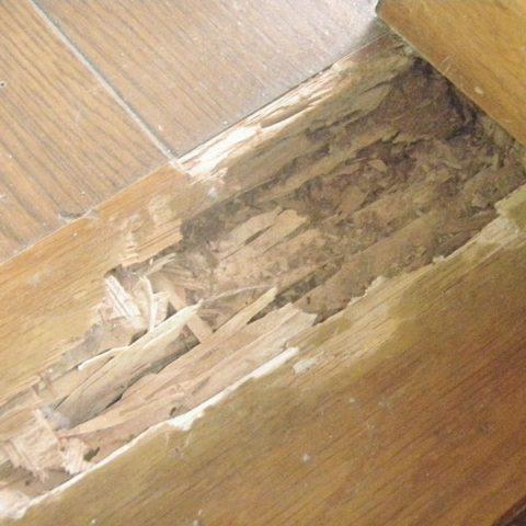 玄関上がり框のシロアリ被害