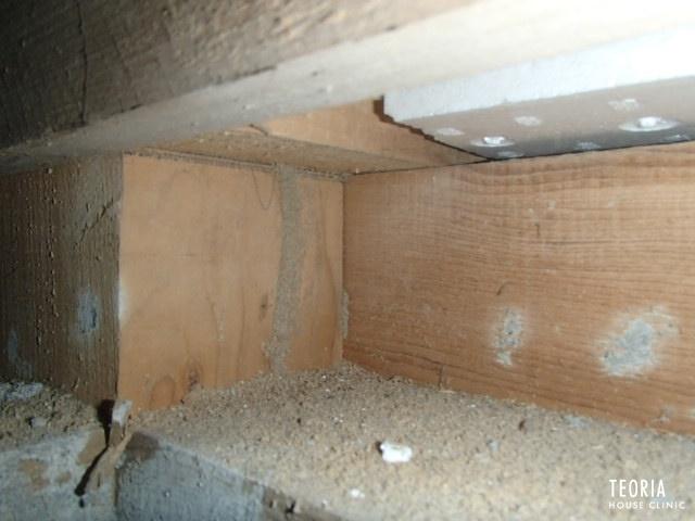 階段下の蟻道