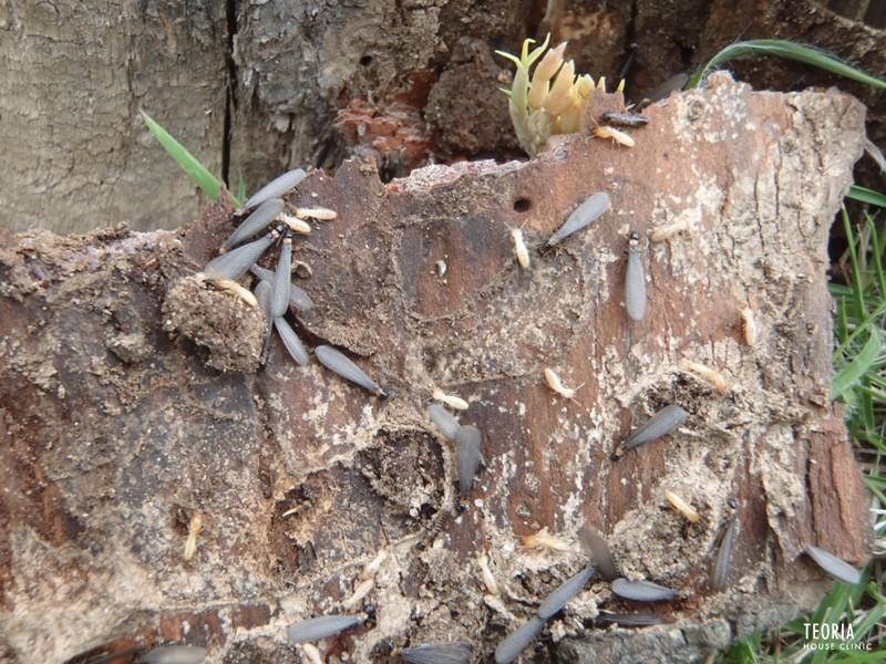 家の外の羽アリ